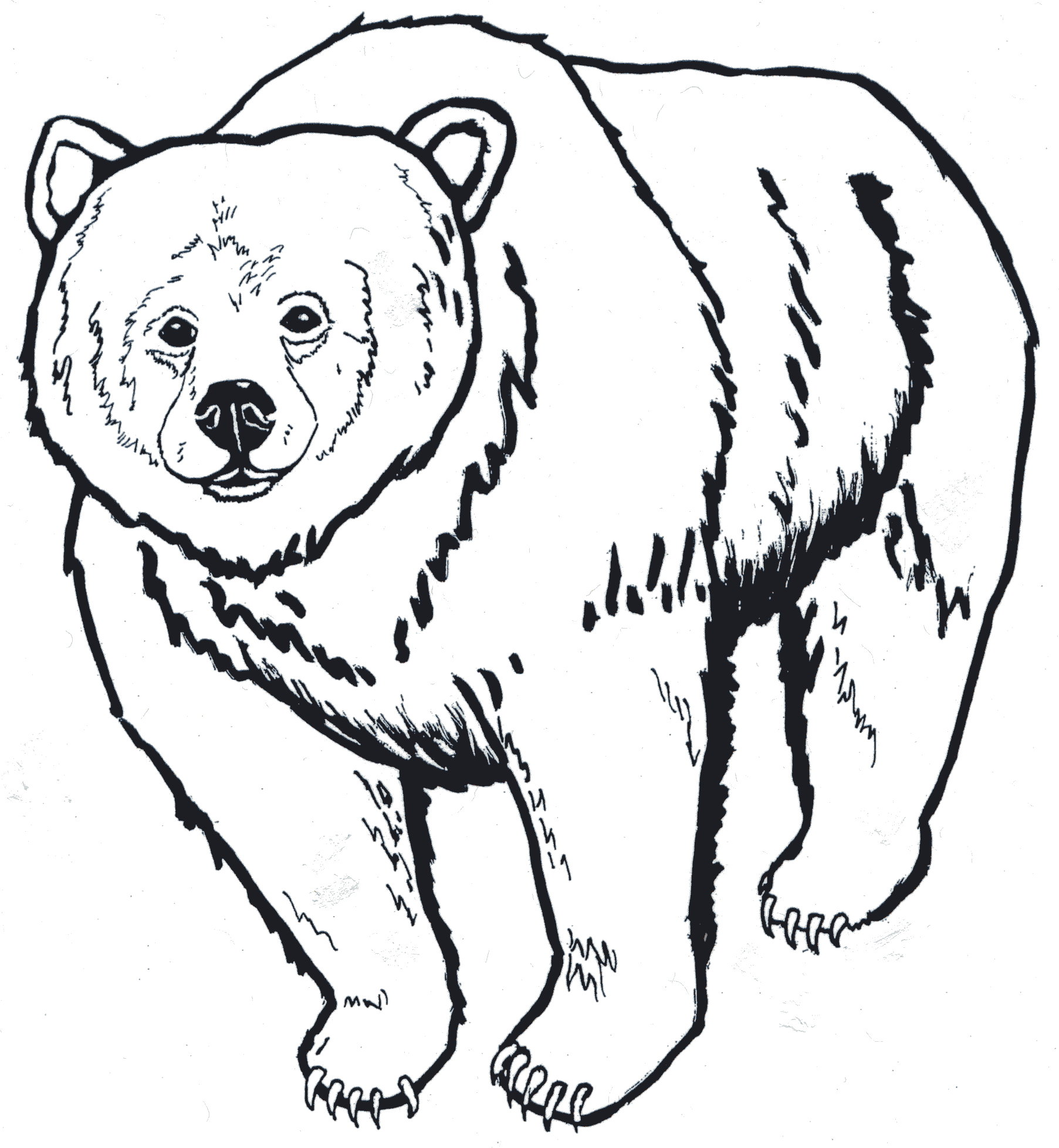 1805x1956 Grizzly Bear Face Outline