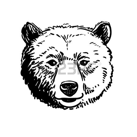 450x450 Vector Pen And Ink Hand Drawn Illustration Of A Bear Head Portrait