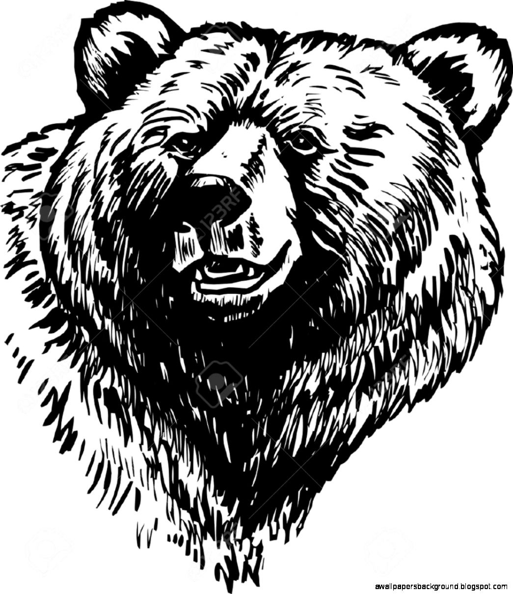 1045x1209 Bear Head Drawing Wallpapers Background