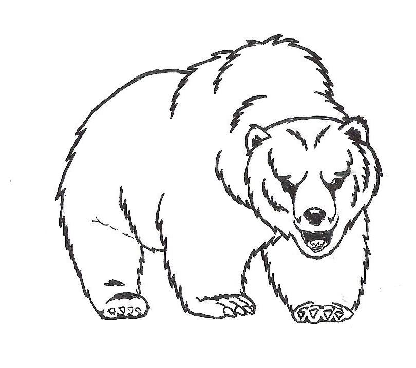 810x717 Bear Head Drawings Image Tips Bear Drawingsphotos
