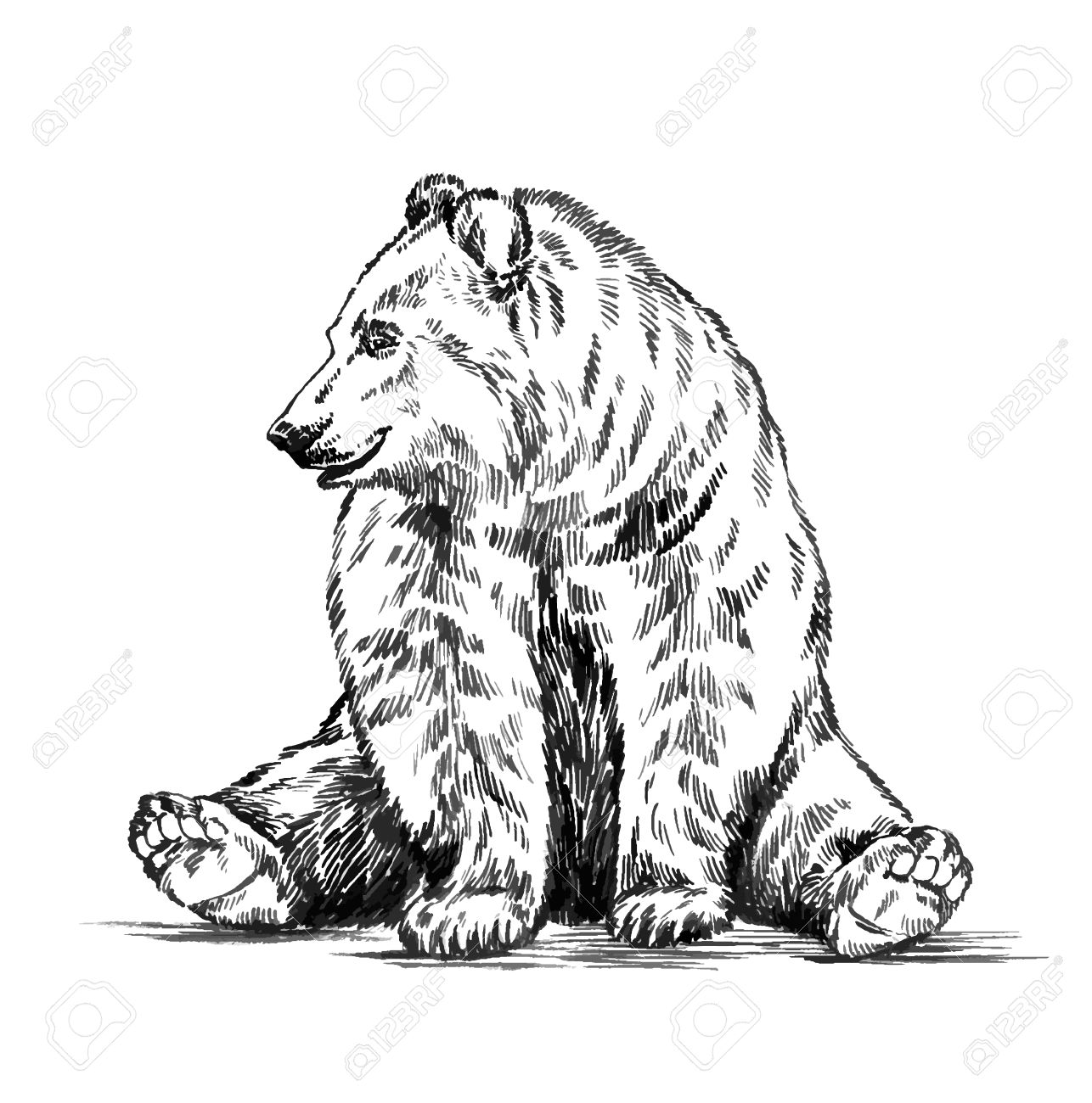1286x1300 Black And White Engrave Ink Draw Isolated Vector Grizzly Bear