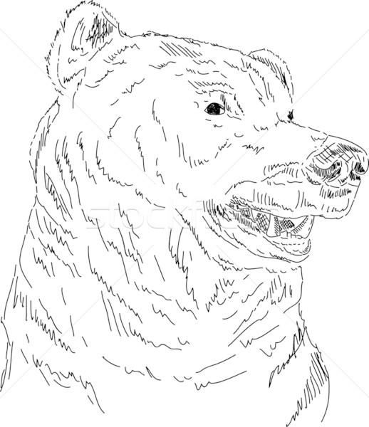 518x600 Grizzly Bear Vector Illustration Pavel Bortel (Pavelmidi