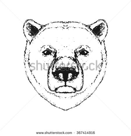 450x470 Image Result For Polar Bear Head Art Polar Bear Images