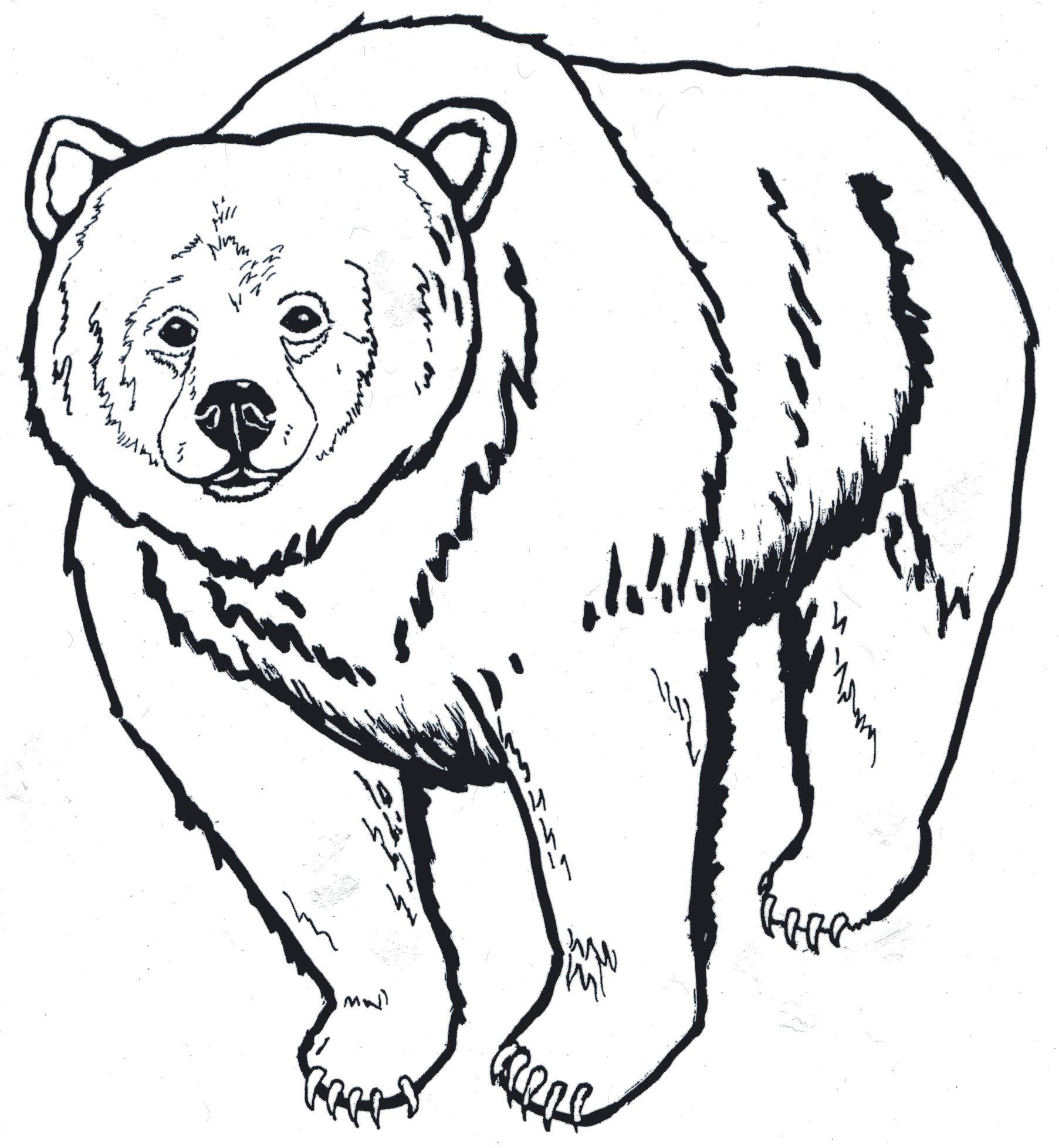 1805x1956 Brown Bear Head Clipart Black And White