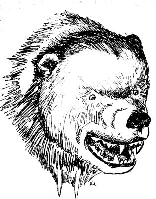 315x400 Fierce Bear Head Sketch