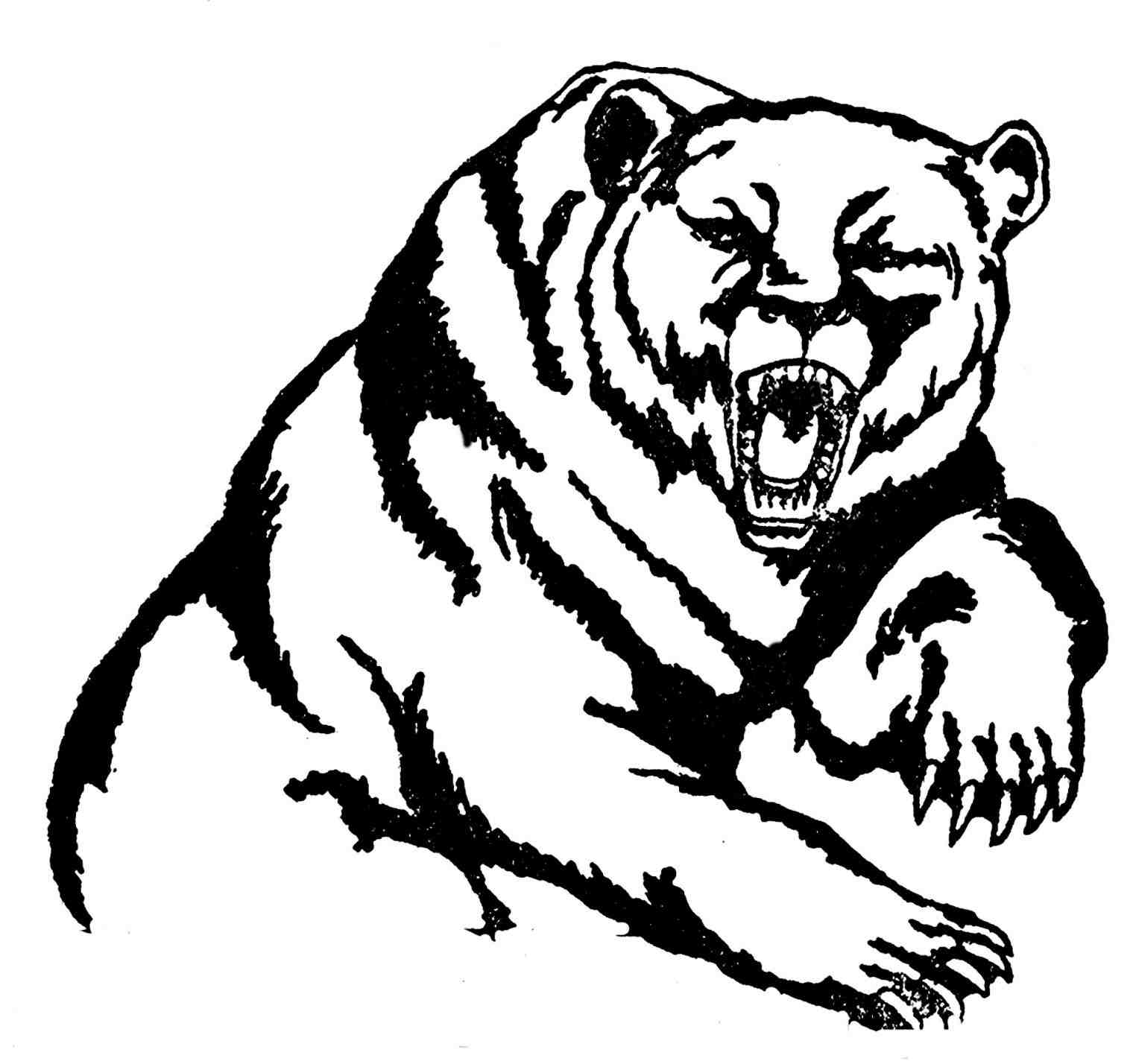 1520x1428 How To Draw A Grizzly Bear Head