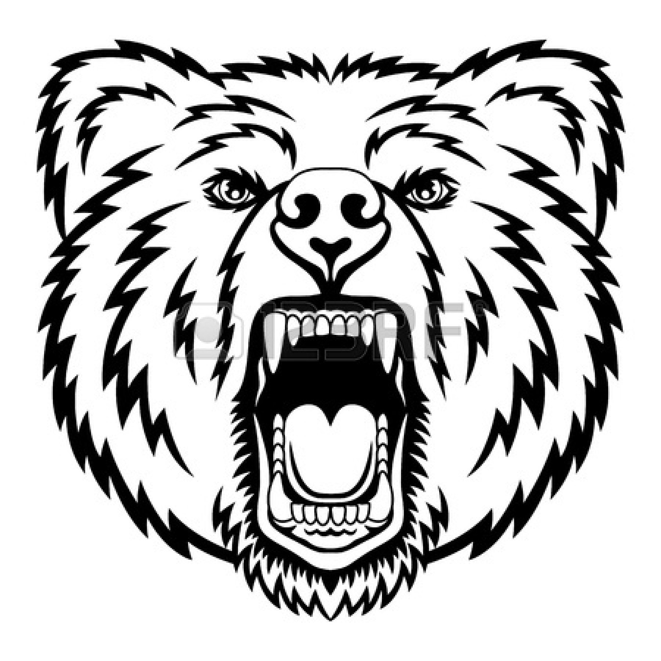 1350x1350 Grizzly Bear Head Drawing