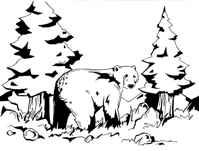 683x520 Grizzly Bear Illustrations Line Drawings Illustration By Harry