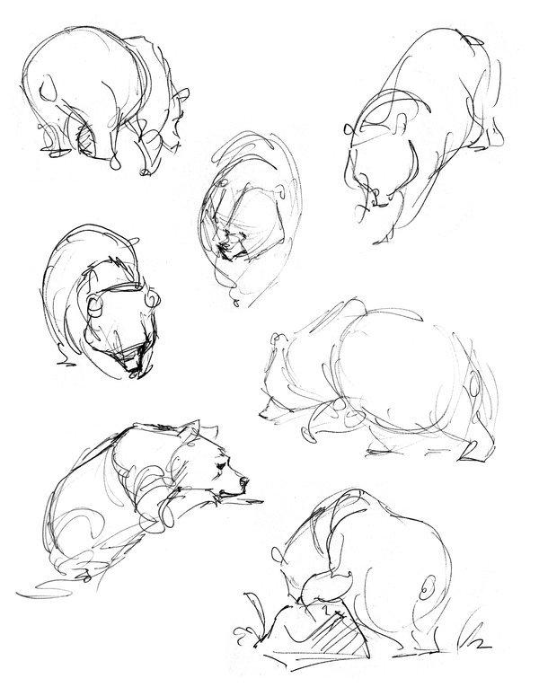 600x775 Bear Sketch Art