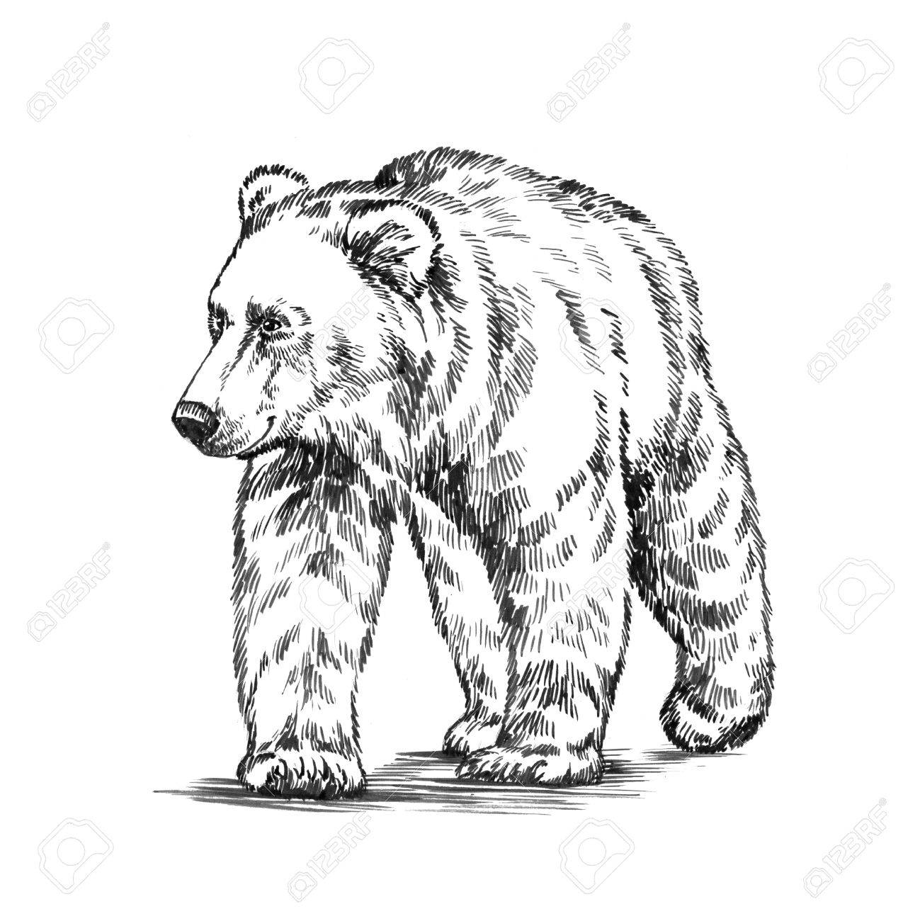 Grizzly Bear Line Drawing at GetDrawings.com | Free for personal use ...