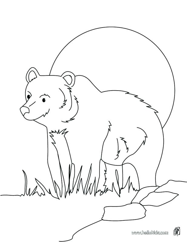 618x799 Coloring Bear Grizzly Bear Coloring Page Teddy Picnic Pages Bears
