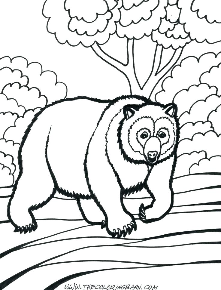 736x964 Grizzly Bear Coloring Pages 85 Also Coloring Page Of A Bear Polar