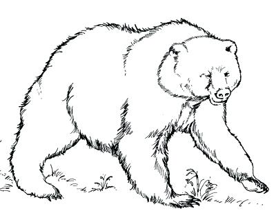 400x322 Grizzly Bear Coloring Pages As Well As Animals For Grizzly Bear