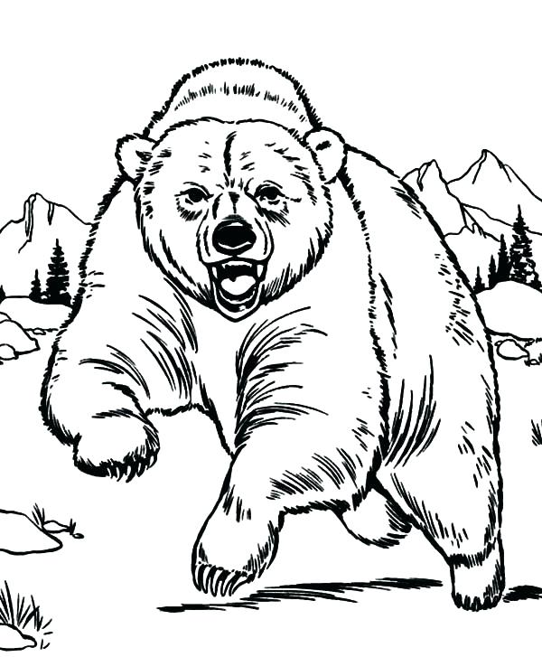 600x727 Grizzly Bear Coloring Pages Free Little Page Of Loves The Children