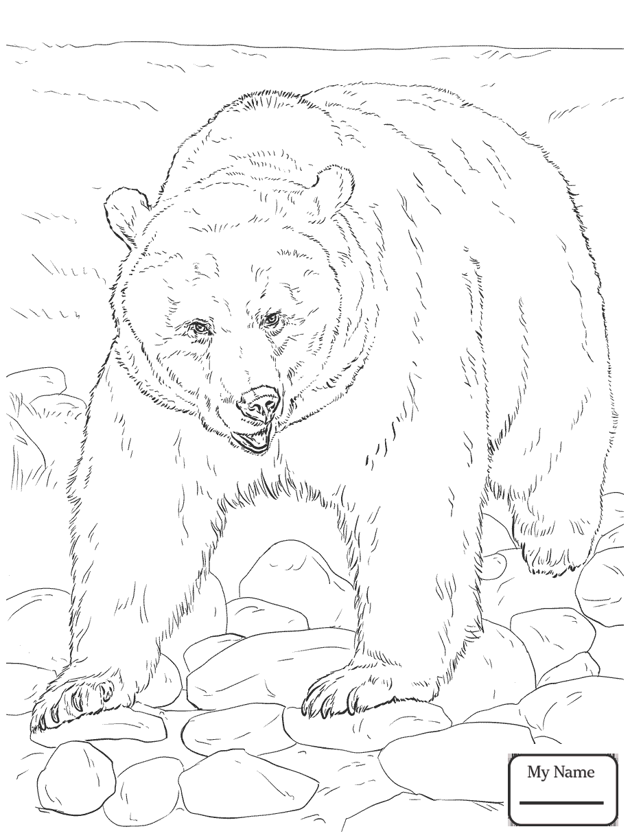 918x1224 Mammals Grizzly Bears Alaskan Grizzly Bear Grizzly Bears Coloring
