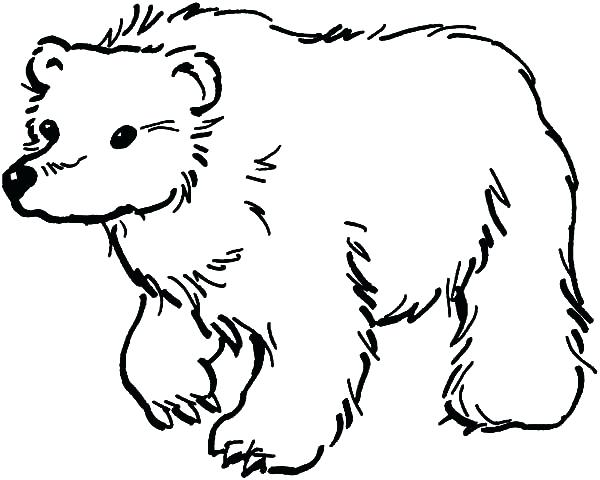 600x480 Bear Coloring Page Pages Animals Printable A Free Grizzly Murs