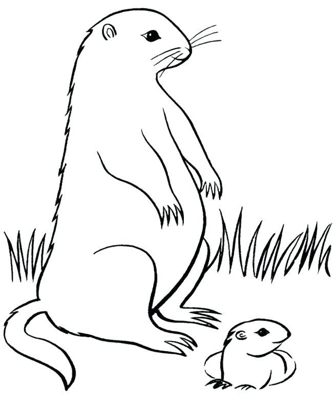 Groundhog Line Drawing