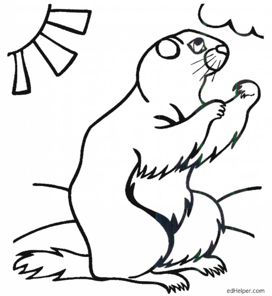 Groundhog Line Drawing at GetDrawings.com   Free for personal use ...