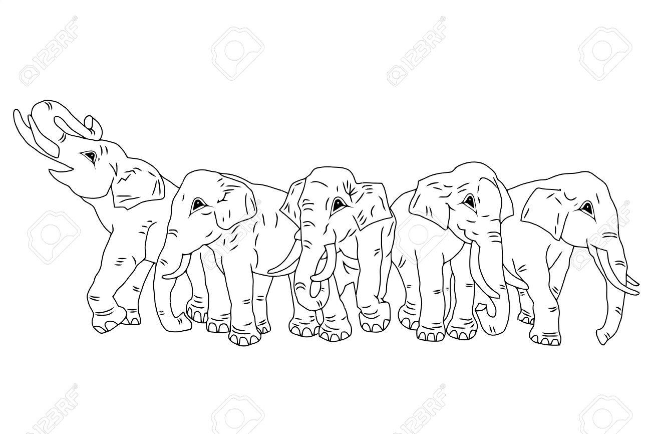 1300x866 Drawing Of Group Of Five Elephants On The Isolated Background