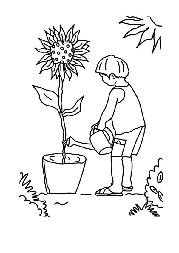 Growing Plant Drawing At Getdrawings Com Free For