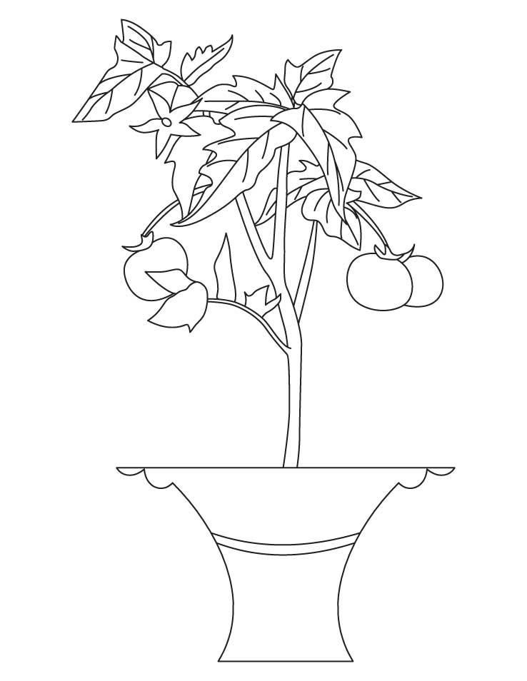 738x954 Tomato Plant Coloring Page Squash