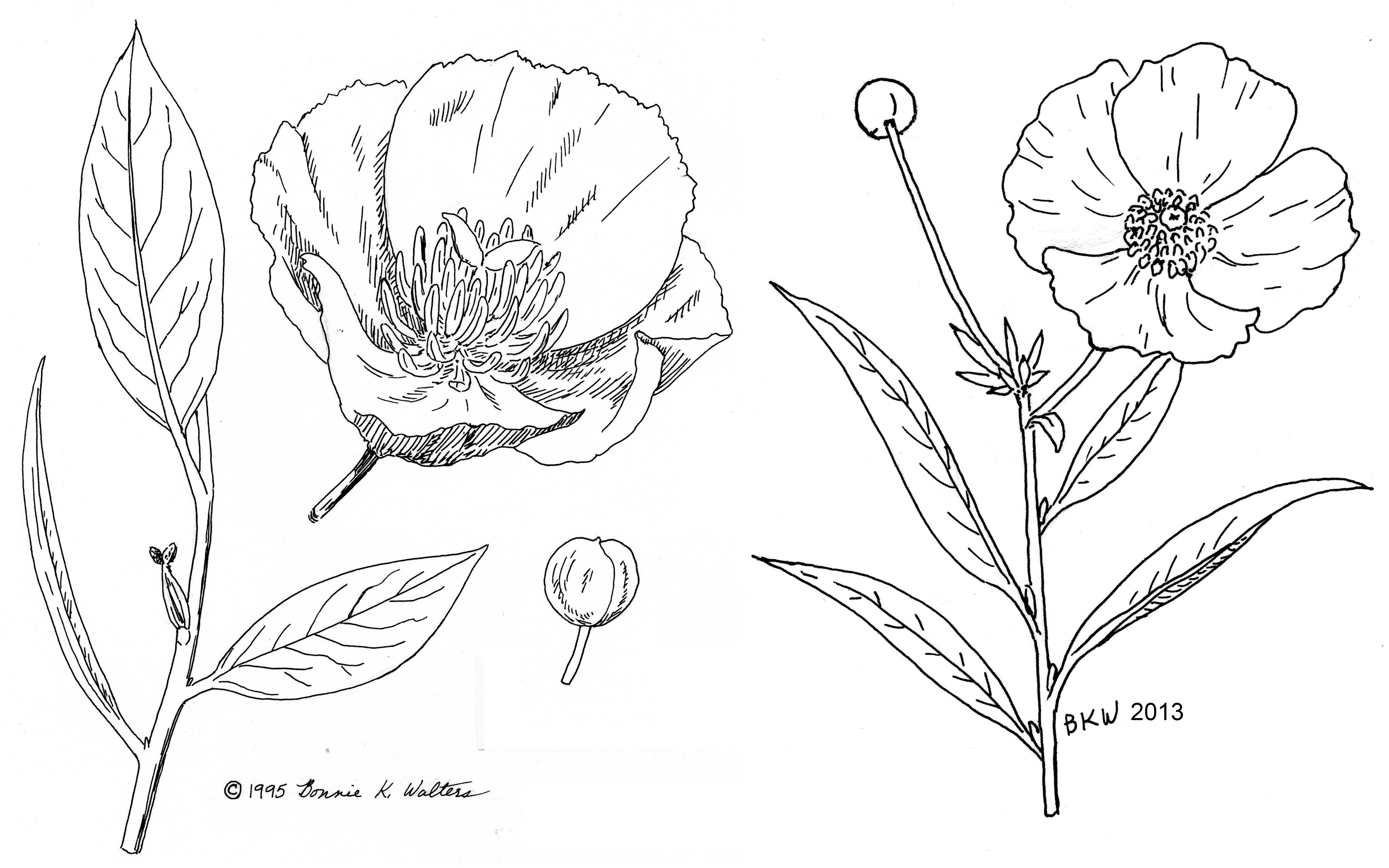 how to draw a plant growing
