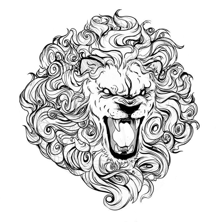 Growling Lion Drawing