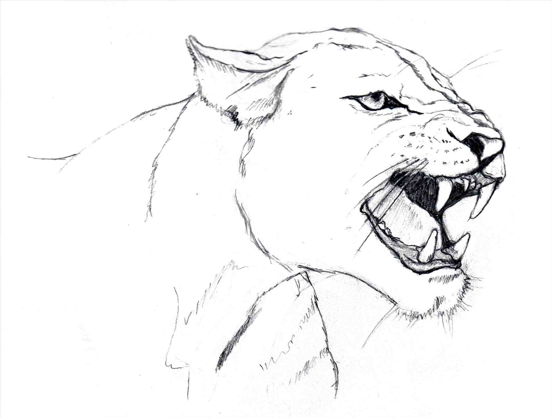 1899x1438 Draw Female Lion. Lioness And Cub Base By Namacub95. Httpss Media