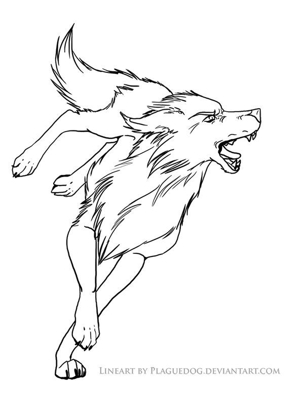 Growling Wolf Drawing
