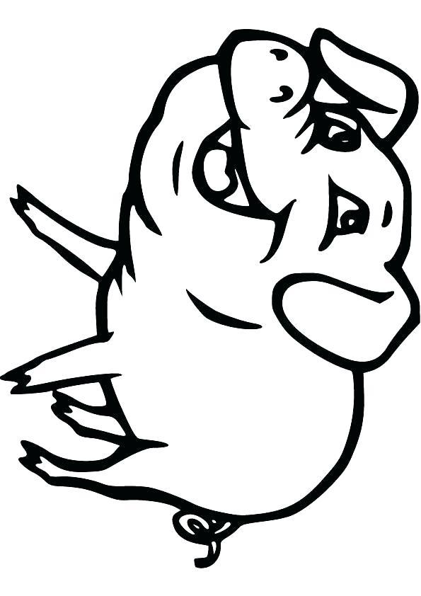 Guinea Pig Cartoon Drawing at GetDrawings   Free download