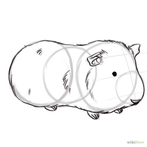 500x500 Draw A Guinea Pig Drawings, Animal And Cavy