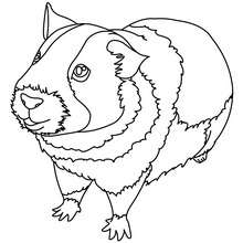 220x220 Guinea Pig Coloring Pages
