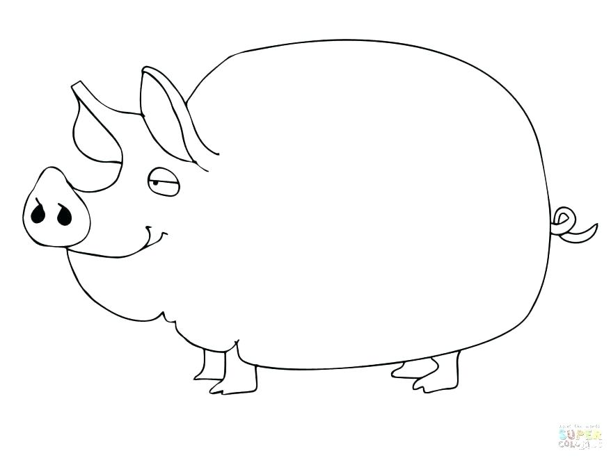 878x659 Guinea Pig Coloring Pages And Surprising Coloring Pages Guinea