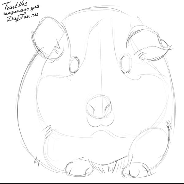 600x600 How To Draw Guinea Pig Step By Step