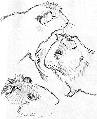 374x455 An Illustrator's Life For Me! Drawing Animals In Graves Park