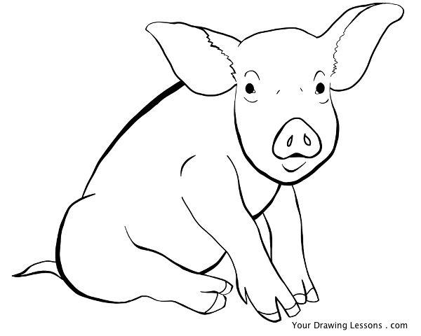 600x480 Pig Line Drawing By Mattleyva