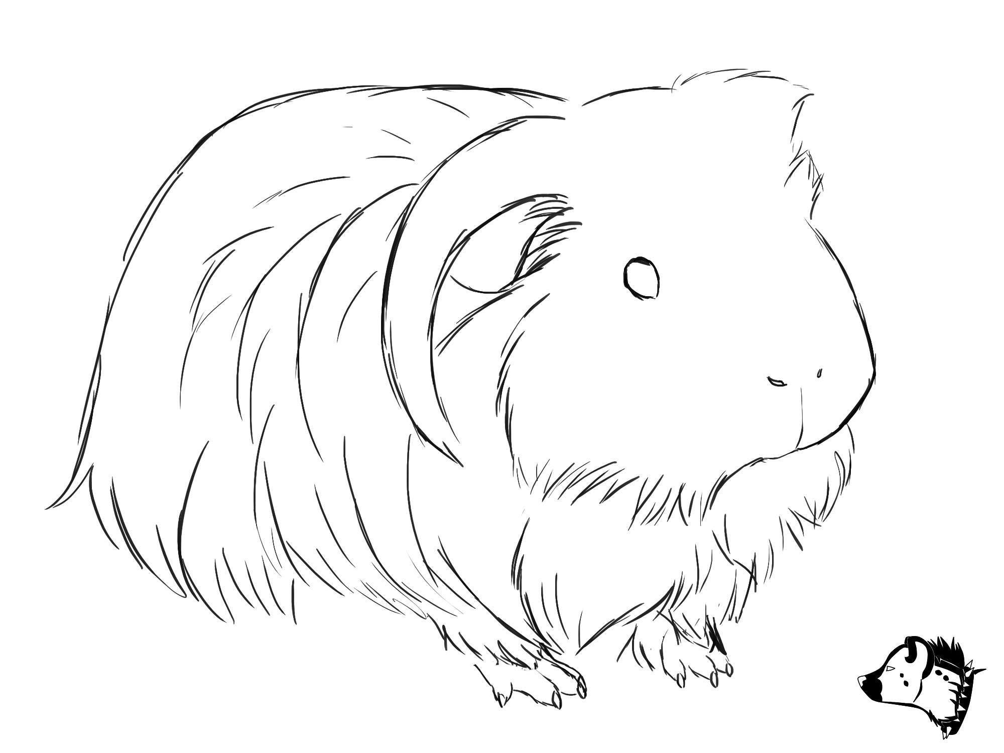 2000x1500 Sketch Drawing From Guineapig Town