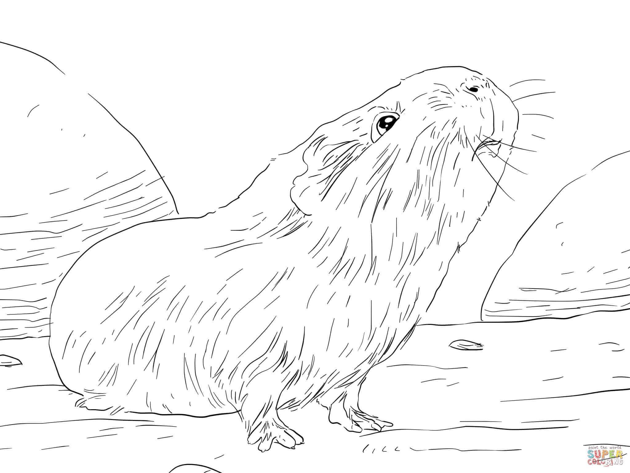 2048x1536 Baby Guinea Pigs Drawings