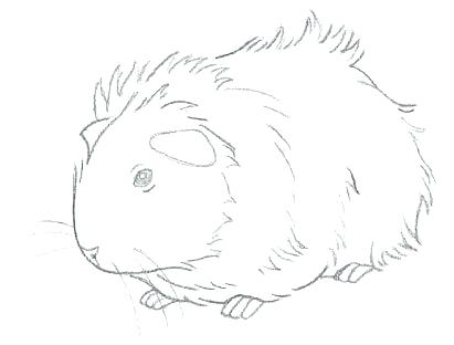 411x312 Cute Baby Guinea Pig Coloring Pages