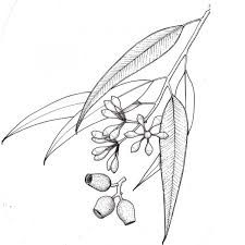 225x225 Gum Leaf Watercolour, Gum Leaves Print, Eucalyptus Leaves