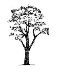 200x252 Gum Tree Silhouette