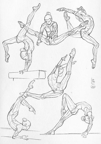 354x500 Some Anatomical Studies