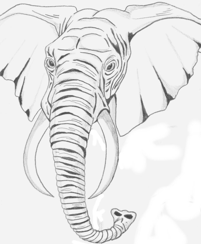700x851 Elephant Sketch By Dj Vegan