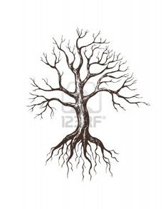 Half Dead Half Alive Tree Drawing