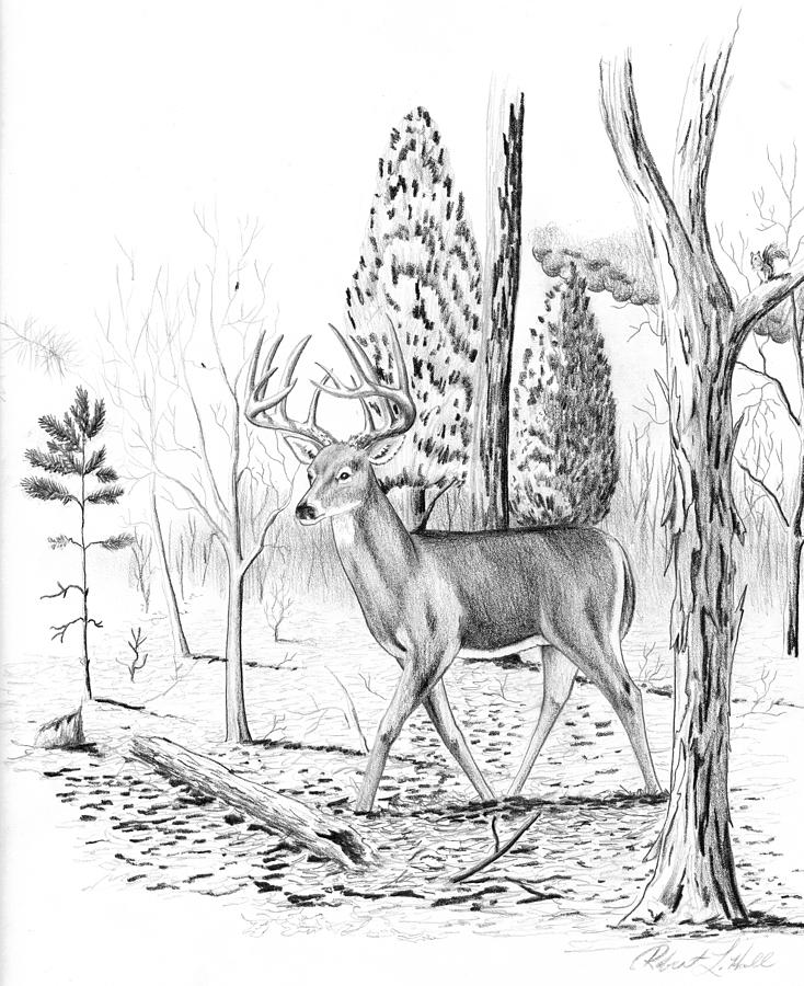734x900 Deer Drawing By Robert Hall