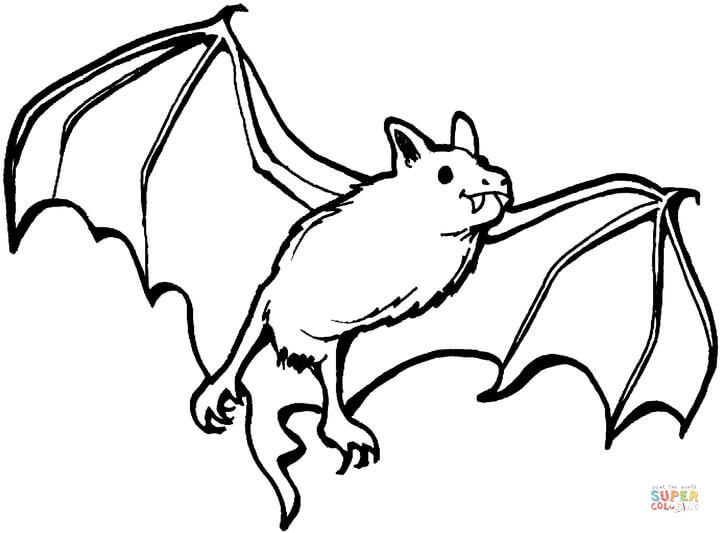 720x533 Vampire Bat Coloring Page Free Printable Coloring Pages