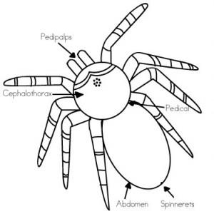 300x300 Halloween Activities Spider