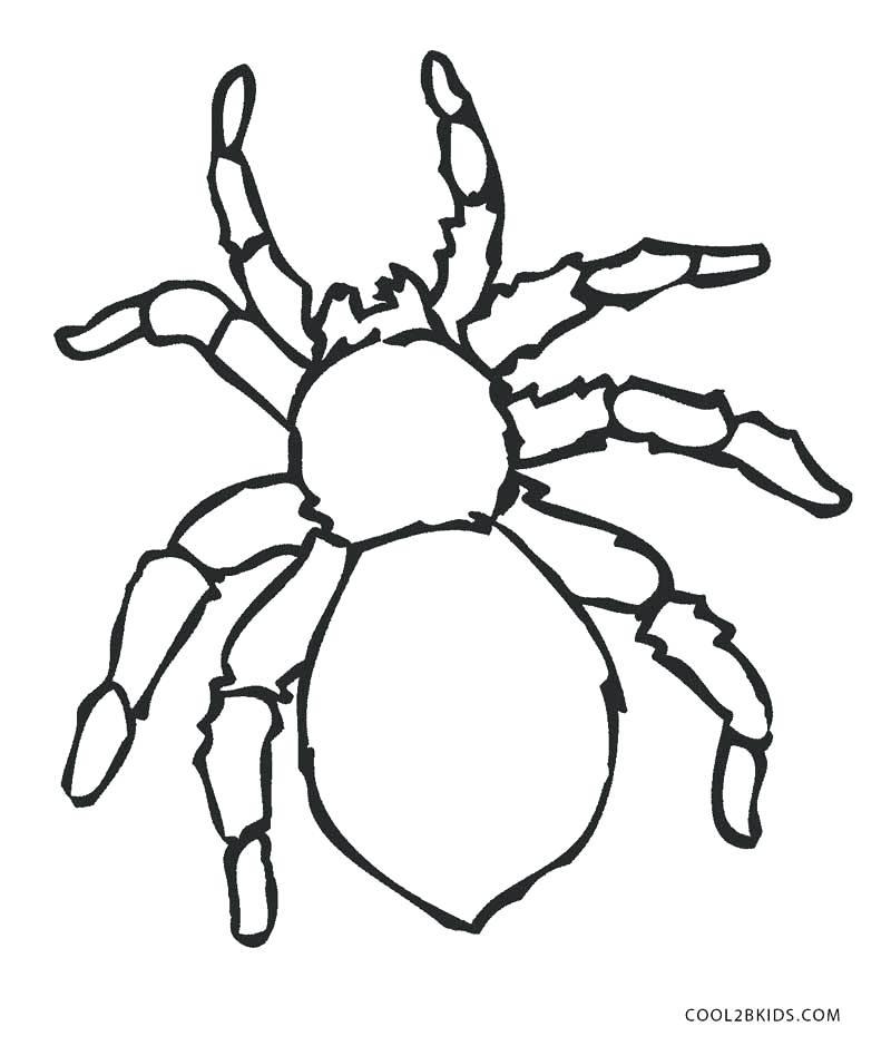 800x939 Spider Coloring Page Spider Coloring Page Free Printable Halloween