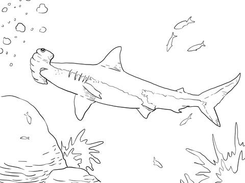 480x360 Great Hammerhead Shark Coloring Page Free Printable Coloring Pages