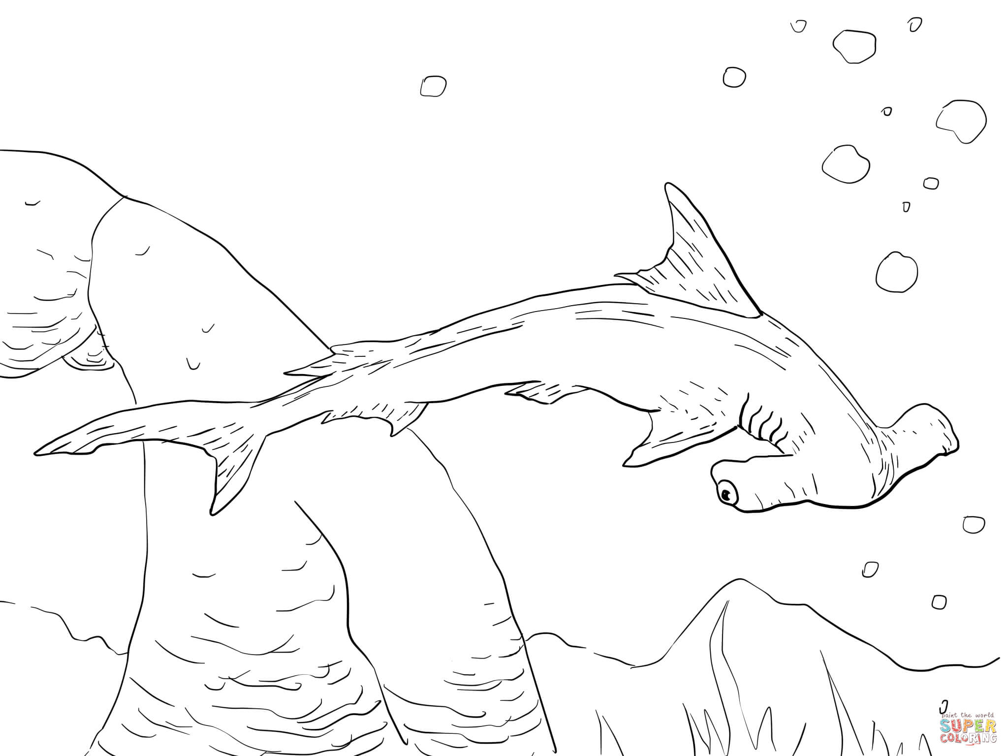 2048x1536 Hammerhead Shark Coloring Sheet For Good Draw Scalloped Page
